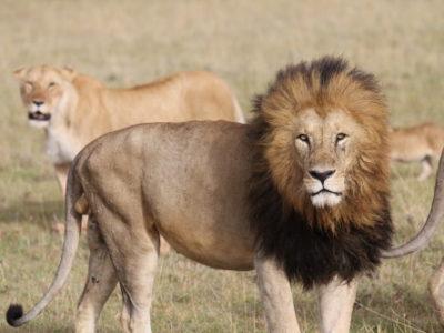Kenya Safari with Christel and Jackson Looseyia