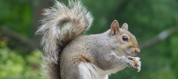 Squirrels and Shamanic Messages