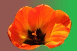 Live webinar 4/11 9am Healing Support