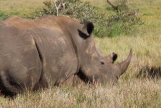 Rhino Energy. christel nani kenya safari june 17-24